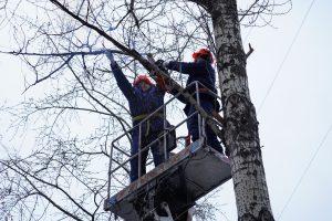 Деревья обрезали в районе. Фото: Денис Кондратьев