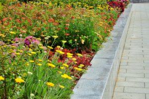 Скверы и площади в районе украсят цветами. Фото: Анна Быкова