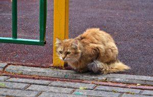 Бездомные животные ищут новых хозяев в столичных приютах. Фото: Анна Быкова
